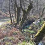En longeant un ruisseau ...